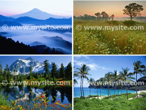 Multiple images batch watermarked using Bytescout Watermarking